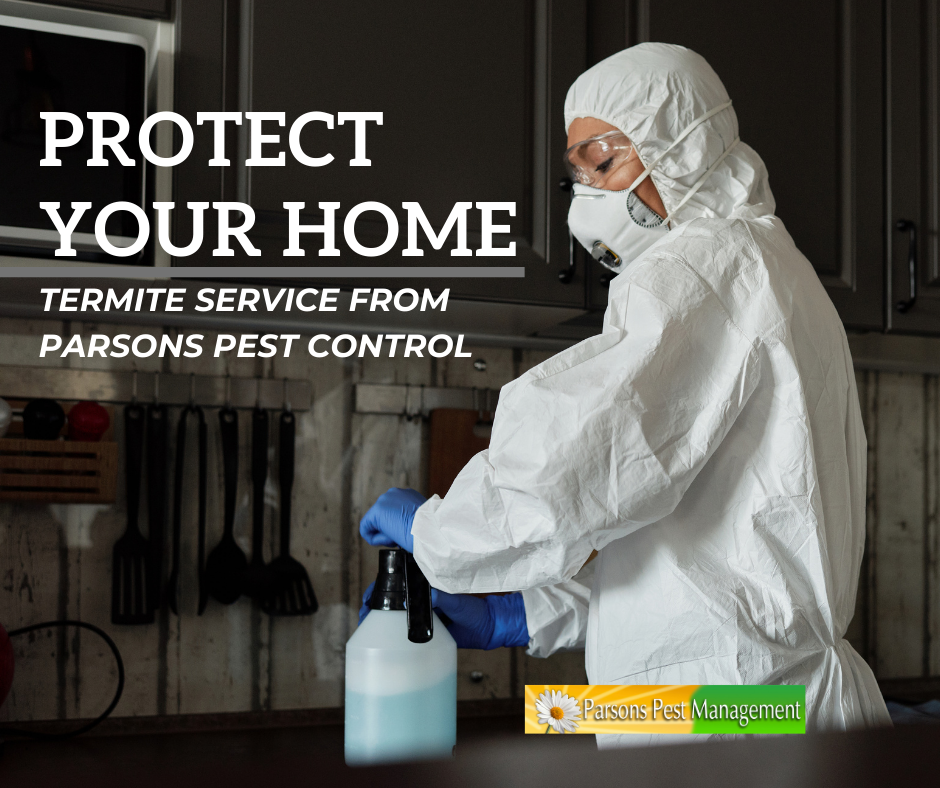 Termite Service from Parsons Pest Control – Protecting Your Home